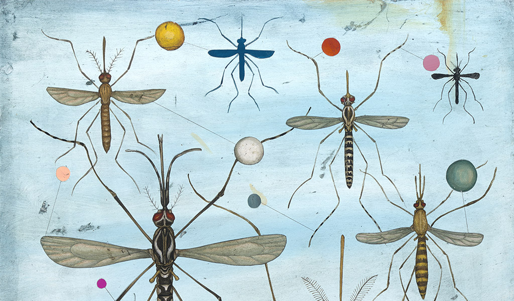Tracking mosquitos that spread deadly viruses
